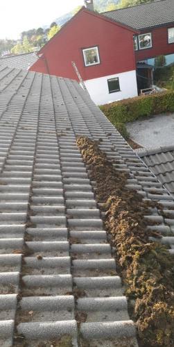 Mose på taket? Vi i Bergen tak og vedlikehold tar også oppdrag i å fjerne mose fra takstein på en skånsom måte, som ikke går utover levetiden på taksteinen. Ta kontakt for et uforpliktende tilbud.